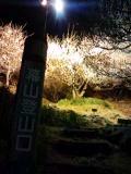 幕山公園-夜-