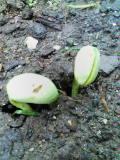 花も豆もスクスク