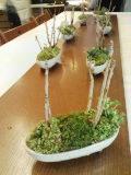 豆盆栽のワークショップ