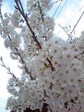 春らんまん♪